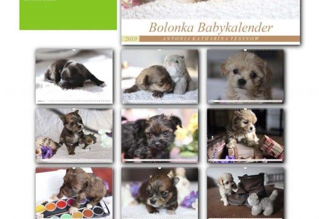 Bolonka Zwetna Babykalender