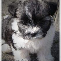 Hundehalter-Haftpflicht-Versicherung