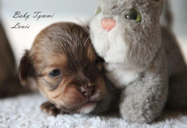 Baby Tymmi Luis – vergeben